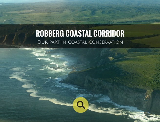robberg-coastal-corridor