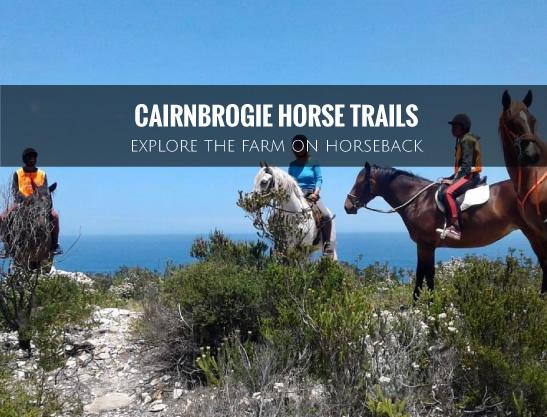 cairnbrogie-horse-trails