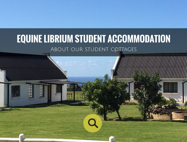 equine-librium-accommodation